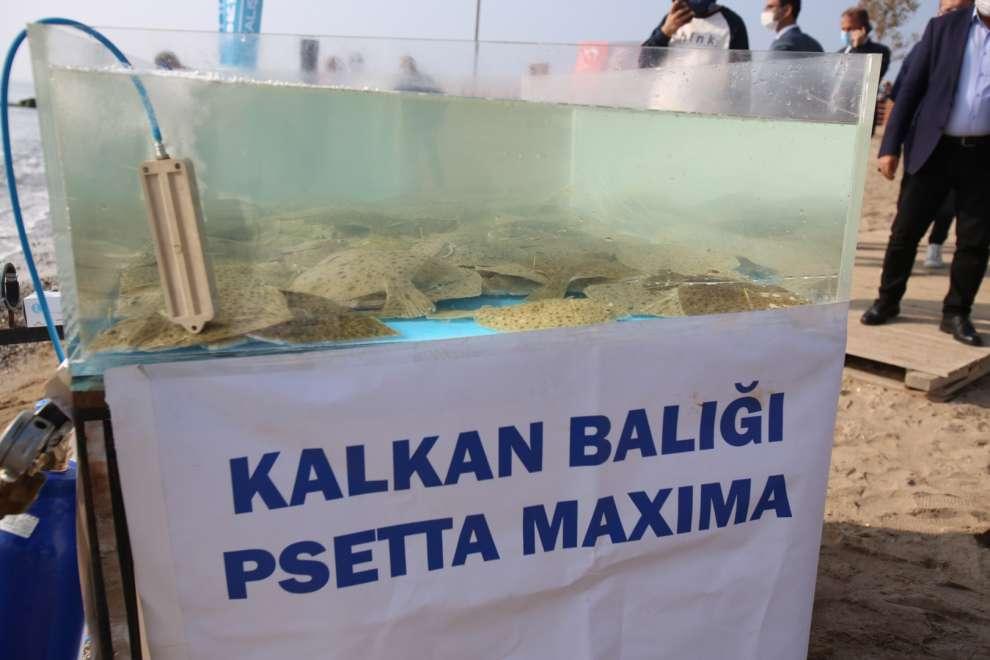 Balıklandırma Projesi'nin üçüncü aşaması Darıca sahilinde gerçekleştirildi
