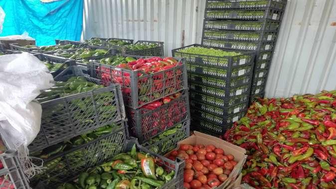 Büyükşehir'den Gebzeli çiftçilere 800 bin TL'lik destek