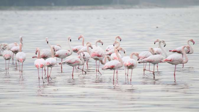 İzmit Körfezi'nde tür sayısı her geçen gün artıyor