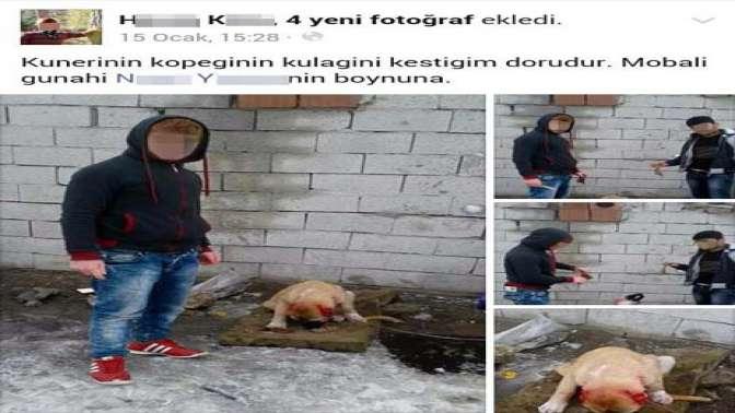 Kulakları kesilmiş köpek fotoğrafları isyan ettirdi
