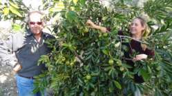 Emekli memur çift, çikolataya alternatif ağaç yetiştirdi
