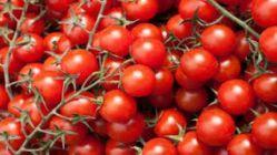 Rusya'dan çok önemli domates açıklaması