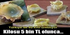 Arı sütünün kilosu 3-5 bin lira